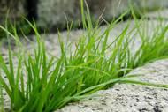 trucs-herbes